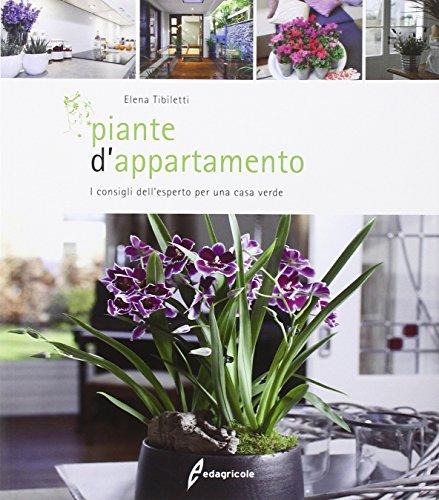 piante-dappartamento-i-consigli-dellesperto-per-una-casa-verde
