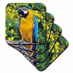 3dRose cst_84082_2 Macaw, Parrot, Tropical Bird, South America NA02 KSC0031 Kevin Schafer Soft Coasters (Set of 8)