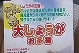 【野菜苗】【種イモ】ショウガ 大ショウガお多福300g 2パックセット 【送料込】
