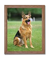 German Shepherd Puppy Dog Kids Room Animal Home Decor Wall Picture Oak Framed Art Print