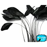 1 Dozen - BLACK Stripped Coque Tail Feathers