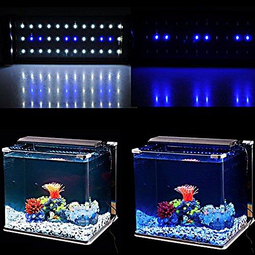 Zetong Tech Aquarium Eclairage Led Luminaire De Ampoule Lampe 6 W 36