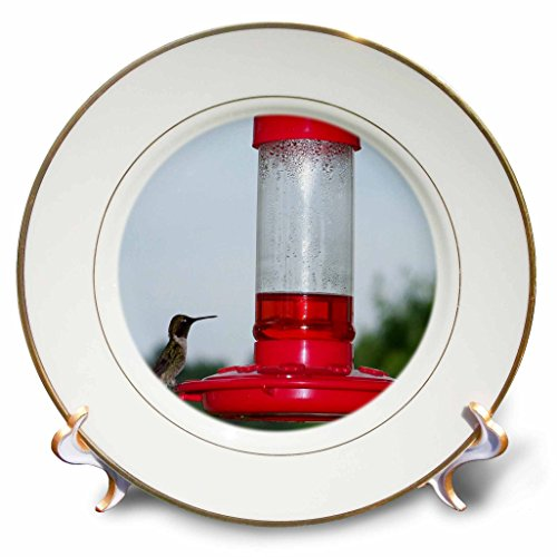 Rebecca Anne Grant Photography Birds - Hummingbird On Feeder - 8 inch Porcelain Plate (cp_14197_1)