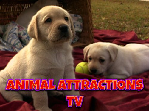 Animal Attractions TV - Season 1