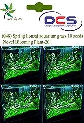 DCS (048) Spring Bonsai aquarium grass 10 Seeds Mosa Black Novel Blooming Plant-20