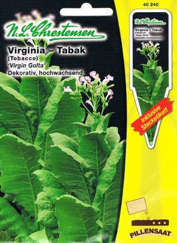 virginia tabak virgin golta tobacco nicotiana tabacum. Black Bedroom Furniture Sets. Home Design Ideas