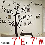 DaGou, Huge 7 Ft(h) X 7 Ft(w) Wall Decals, Memory Tree and Birds, Wall Stickers, Murals