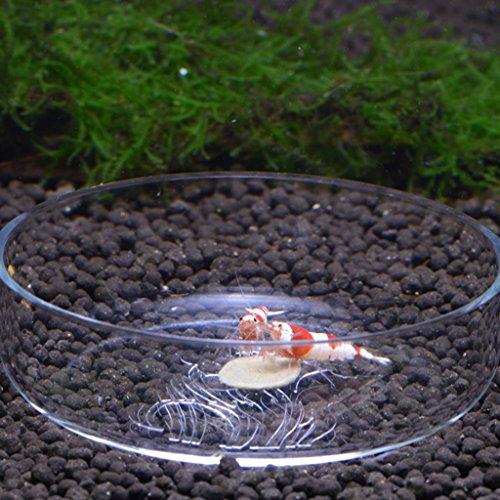 Plat de crevettes d alimentation pour crevettes acrylique for Alimentation poisson aquarium
