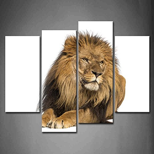 4 Panel Wall Art Lion Lying Down Looking Away Panthera Leo 10 Years Old Isolated Painting Pictures Print On Canvas Animal The Picture For Home Modern Decoration Piece (Stretched By Wooden Frame,Ready To Hang)