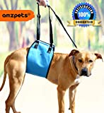 Lifting Harness By AMZpets - Large. Helps Dogs Stand Up, Walk, Climb Stairs, Get into Trucks. Great for Car Ramps. Lift sling is Best Alternative to Dog Wheelchair. RECOMMENDED BY VETERINARIANS
