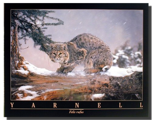 Bobcat in Snow Cat Wild Animal Wall Decor Art Print Poster (16x20)