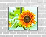 Orange Sunflower Blossom. Fine Art Flower Photography Print for Home Decor Wall Art
