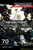 宿根草種子 クリスマスローズ 原種系 ニゲル