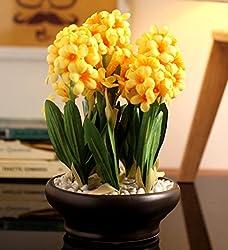 Fourwalls Premium Range Artificial Hyacinth Plant with Stylish Ceramic Vase (ABT26CMHYACINTH/1585/YLW)