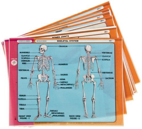American Educational 12 Piece Human Body Transparencies Set (Skin And Bones Set)