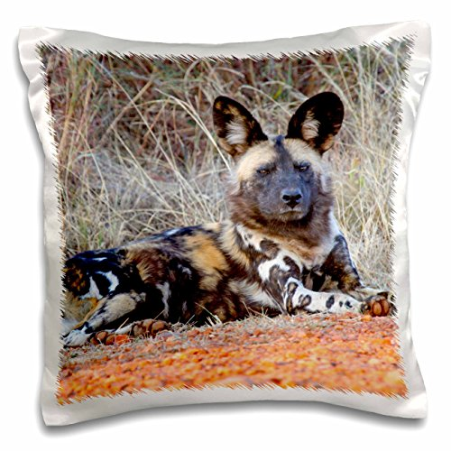 3dRose South Africa, Madikwe Game Reserve, African Wild Dog-AF42 Kwi0013 - Kymri Wilt - pillow Case, 16 by 16-Inch (pc_71541_1)