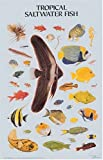 Tropical Saltwater Fish Poster (Dover Posters) (0486390209) by Dover