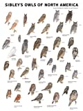 Sibley's-Owls-of-North-America