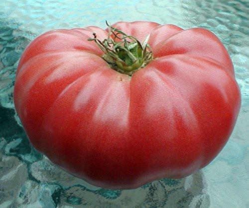 Watermelon Beefsteak Tomato 25 Seeds - Impressive! (Beefsteak Tomato compare prices)