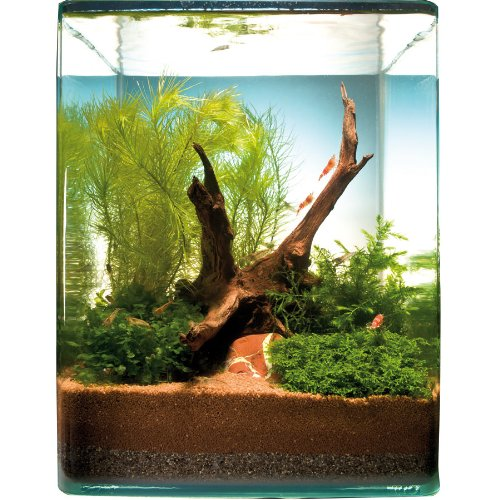 Mayaca Cube für 10 l Nano-Aquarium für 10 Liter