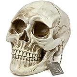 H&S® Life Size Replica Realistic Human Skull Gothic Halloween decoration Ornament