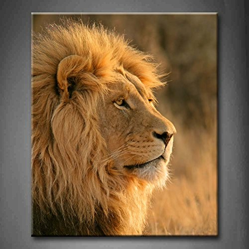 Portrait Of A Big Male African Lion Panthera Leo South Africa Wall Art Painting Pictures Print On Canvas Animal The Picture For Home Modern Decoration (Stretched By Wooden Frame,Ready To Hang)