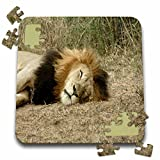 Angelique Cajam Big Cat Safari - South African Sleeping Lion headshot - 10x10 Inch Puzzle (pzl_20105_2)