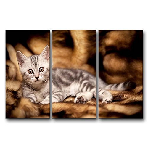 3 Panel Wall Art Painting Gray Kitten Lyingin The Sofa Pictures Prints On Canvas Animal The Picture Decor Oil For Home Modern Decoration Print For Girls Room