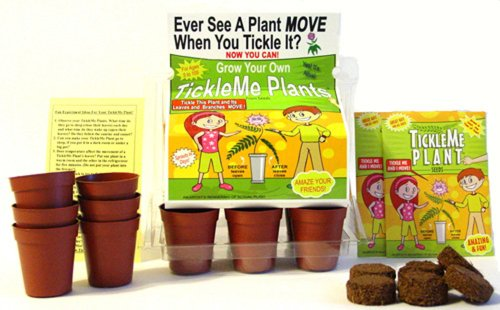 "TickleMe Plant Greenhouse kit with science activity card to"" Grow the only House Plant that closes its leaves and lowers it branches when you Tickle It) Great Unique Gift Idea!"