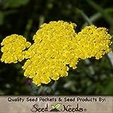 500 Flower Seeds, Gold Yarrow (Achillea filipendulina) Seeds by Seed Needs