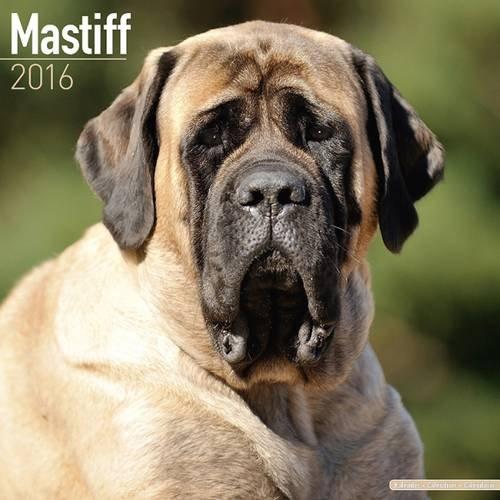Mastiff Calendar 2016