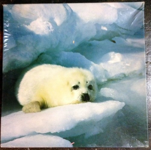 Furry Springbok Jigsaw Puzzle Baby Seal Over 500 Pieces - 1