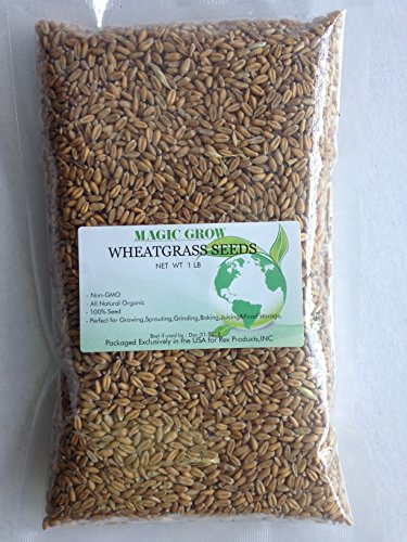 Certified Organic Wheatgrass Seed 1lb. Non-GMO - Guaranteed to Grow (Non Gmo Wheatgrass Seeds compare prices)