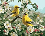 "Paint By Number Kit 16""X20""-Goldfinches"