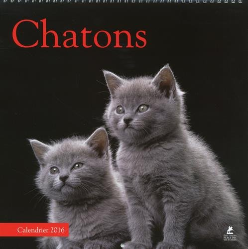 CHATONS CALENDRIER 2016