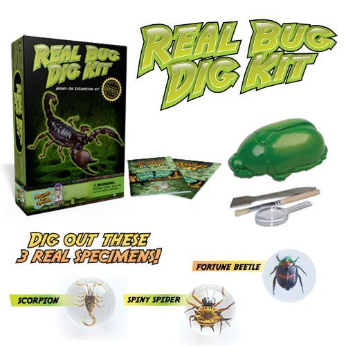 Discover with Dr. Cool Real Insect Excavation Science