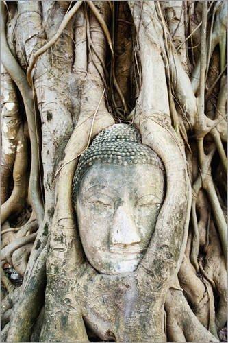 holzbild-60-x-90-cm-buddhakopf-im-feigenbaum-von-matthew-williams-ellis-robert-harding