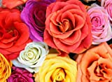 Roses - Premium Quality Mouse Mat 24 x 19cm - #2