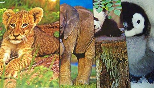 Wild Animal Babies Folder 4 Pack ~ Lion Cub, Elephant Calf, Panda Cub, Baby Penguin front-476873