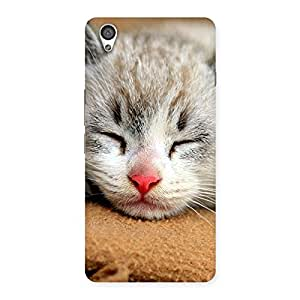 Special Premium Cute Sleepings Cat Multicolor Back Case Cover for OnePlus X