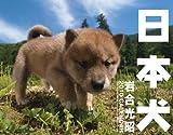 2010カレンダー 日本犬