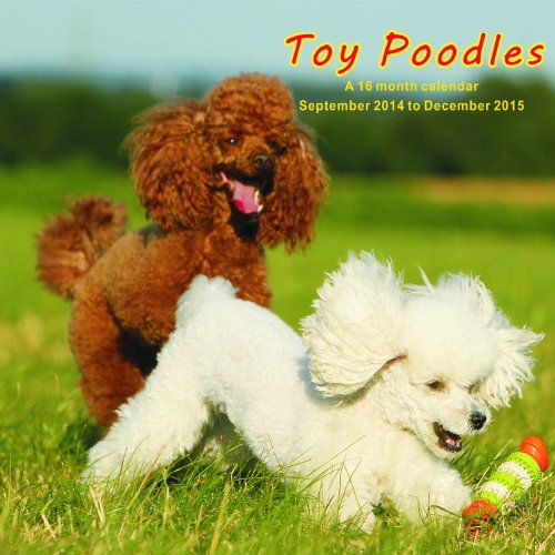 Toy Poodles Calendar - 2015 Wall calendars - Dog Calendars - Monthly Wall Calendar by Magnum