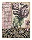 Cottage Rose II Art Poster PRINT Megan Meagher 18x22
