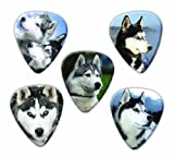 Siberian Husky Dog 5 Loose Guitar Picks