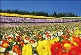 PT-019 ポピー咲く四季彩の丘/美瑛町/北海道 「北の大地から - 花咲く丘」ポストカード