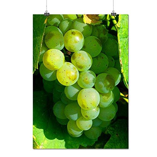 vert Grain de raisin Naturel Ensoleillé Matte/Glacé Affiche A2 (60cm x 42cm) | Wellcoda