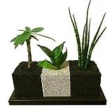 【eco-pochi】エコポチ・キューブトゥーリオ 観葉植物系 (角型ミニ3個セット)
