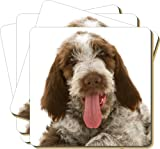 4x Italian Spinone Dog Picture Coasters Gift Set, Ref:AD-SP2C