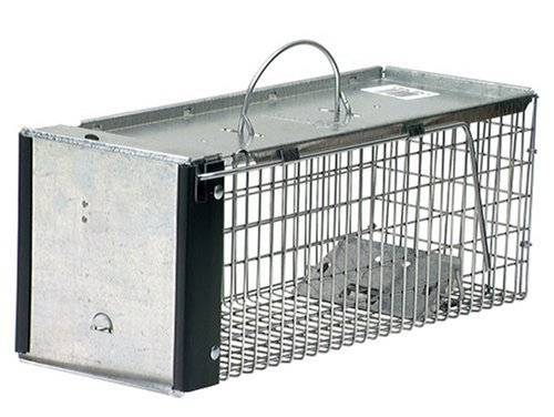 havahart cage trap to catch mouse