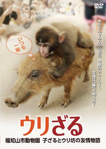 ウリざる 福知山市動物園      子ざるとウリ坊の友情物語